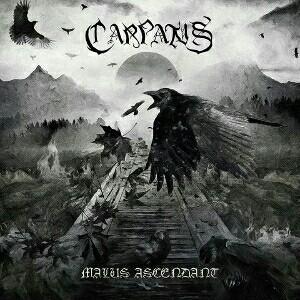 carpatus – malus ascendant